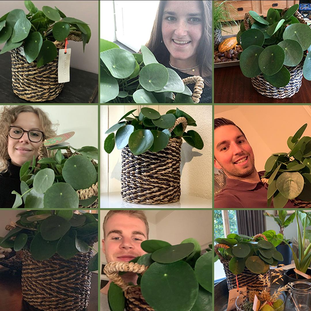 WETALENT Nieuws afbeelding Een Plantsome surprise!